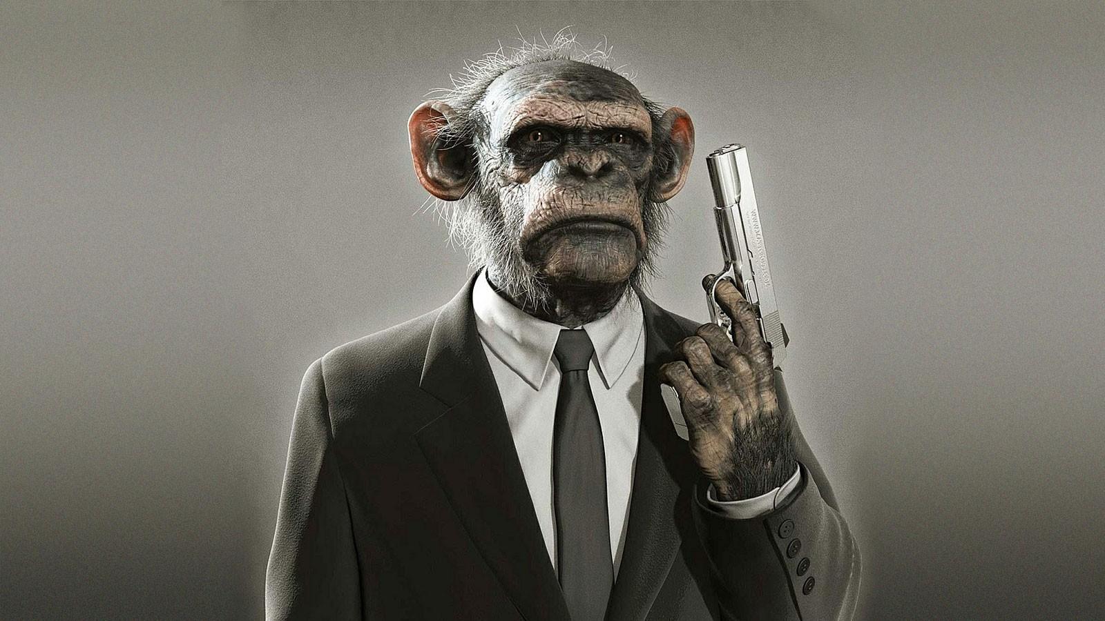fevrier-bilan-mensuel-singe-monkey-2013