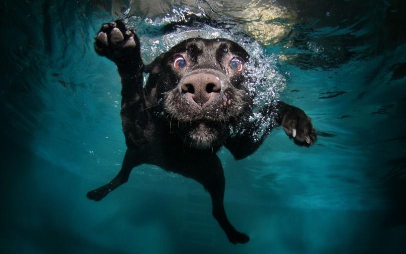 bilan-mensuel-avril-2013-new-protocol-pusaikozu-dog-under-water-funny